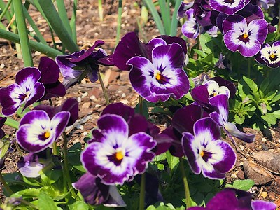 The Williamsburg Botanical Gardens
