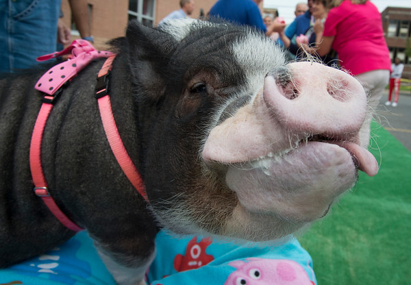 10/08/19 Wesley Bunnell | StaffrrThe fifth annual Kiss a Pig Contest winner was revealed on Tuesday afternoon at Imagine Nation with the winner who raised the most money receiving a kiss from Daisy the pig. All donations were to support Imagine Nation programs.