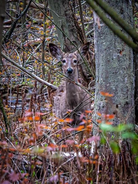 Look at the Neighbors, Oh Deer!