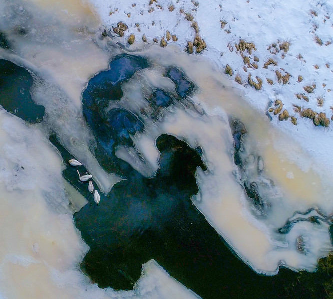 Trumpeter Swan group on Stone Lake aerial drone view Sax-Zim Bog MN DJI_0003-7.jpg