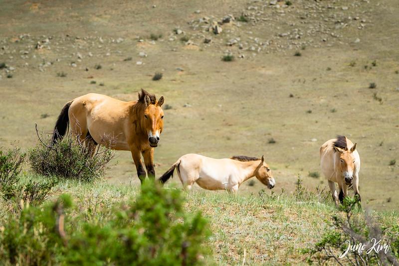 Kustei National Park__6109563-Juno Kim.jpg