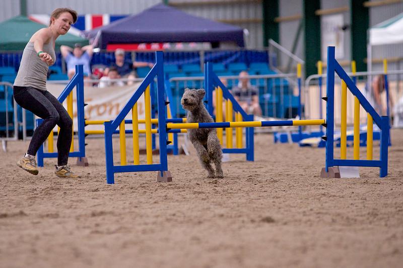 small dog final 1249.jpg