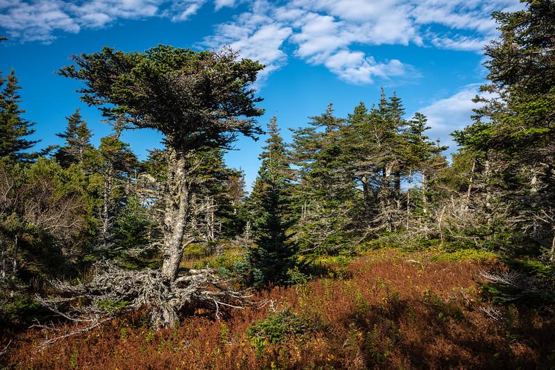 Cape Breton colours.jpg