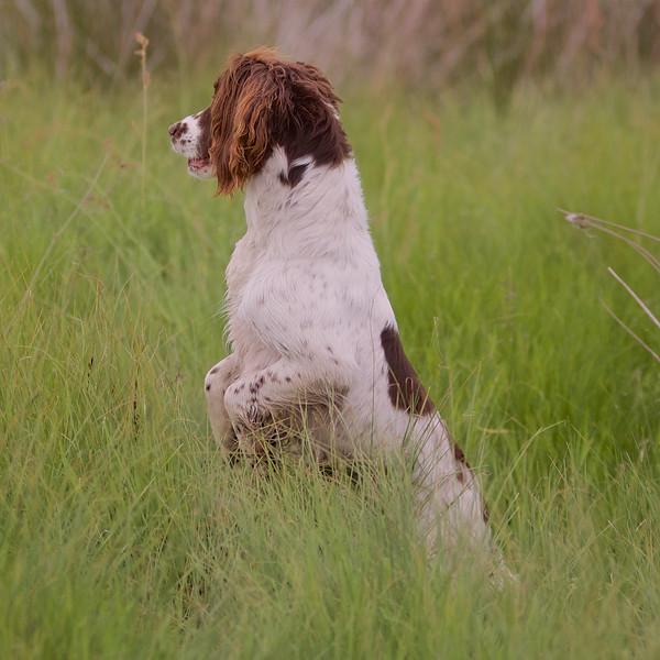 Marking Moss  745.jpg