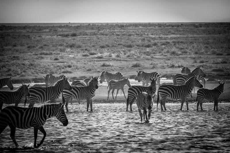 Tanzania_Feb_2018-335.jpg
