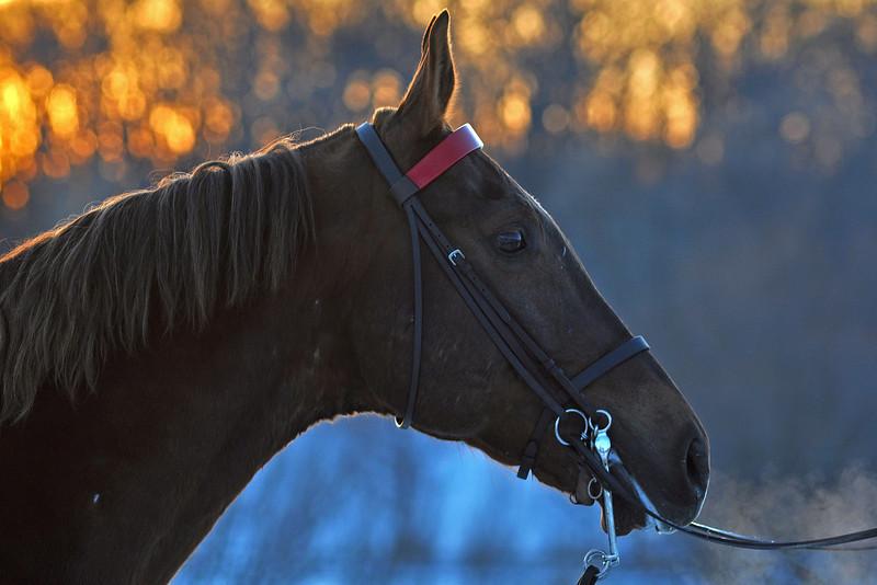 Sunset Horse.jpg