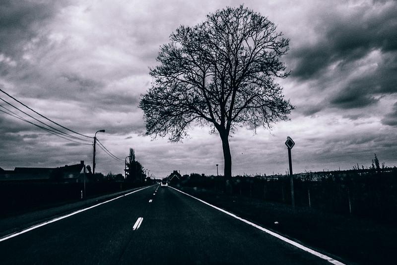 52358.5003.the-road-the-tree.jpg