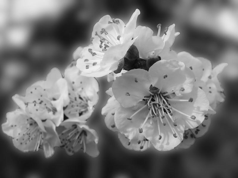 spring flowers-2.jpg