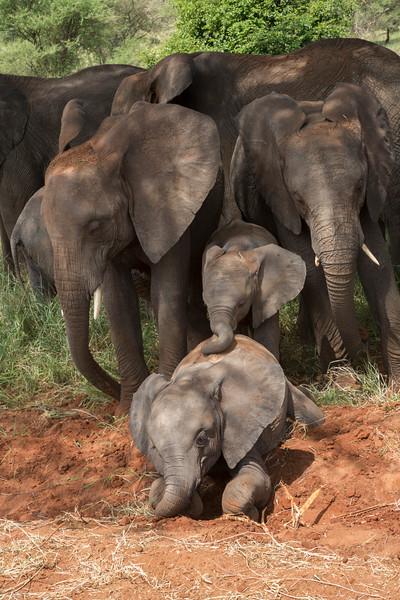 Wildlife of the Serengeti