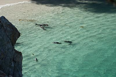 Point Lobos Fauna