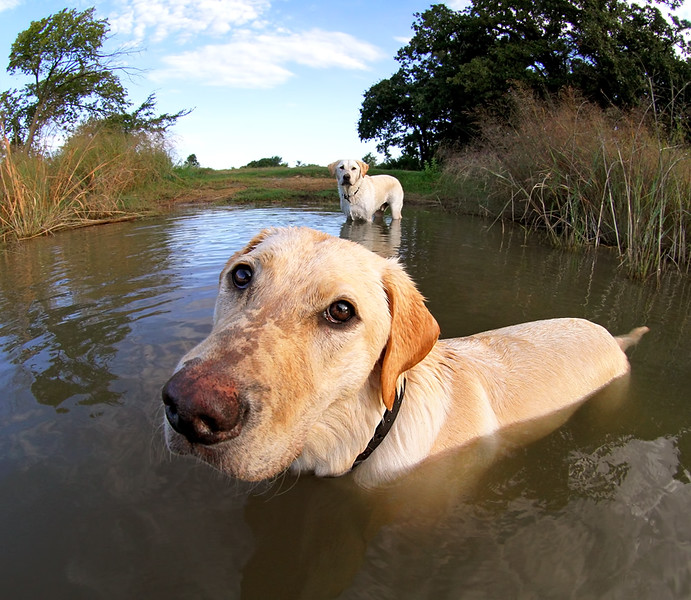 Labs At The Lake.jpg