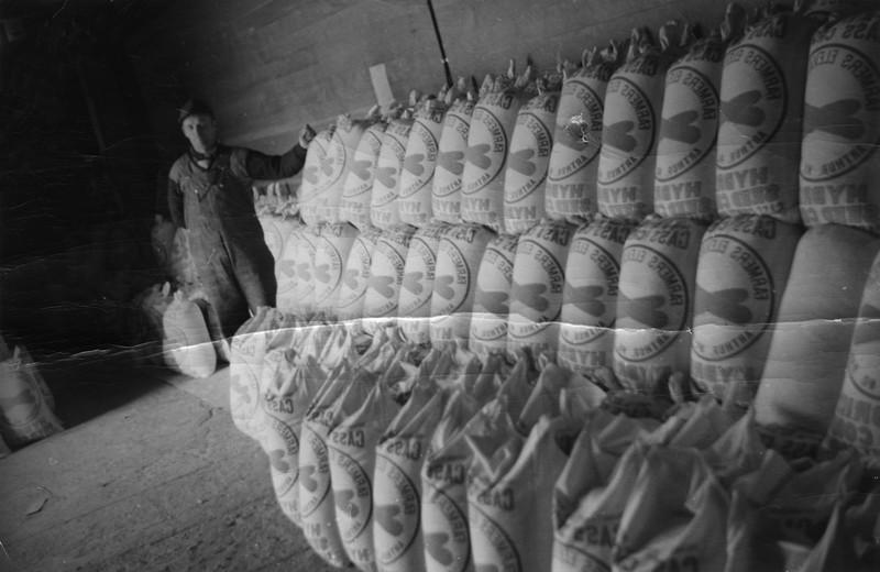 ARE014.  Sacks of feed corn – ca 1950.jpg