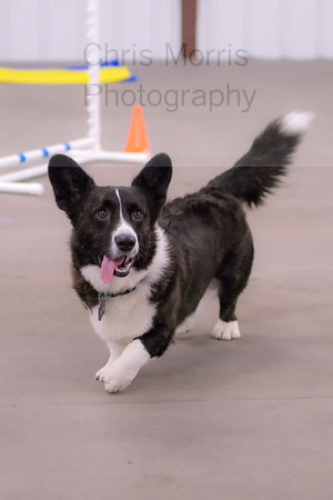 Canine Sports Academy 2014