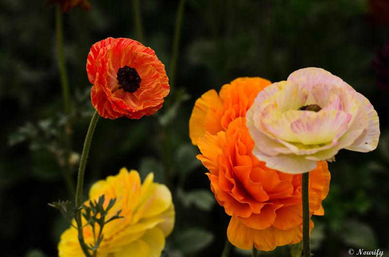 130428_123_FlowerField.jpg