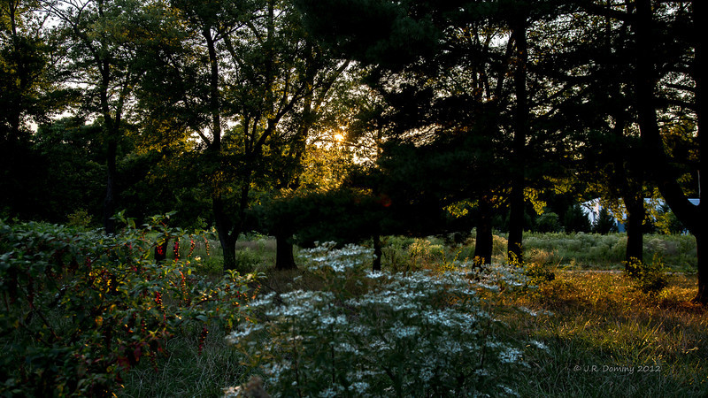 The Sun sets on Maple Ridge Tall Pine State Preserve, Mantua, New Jersey