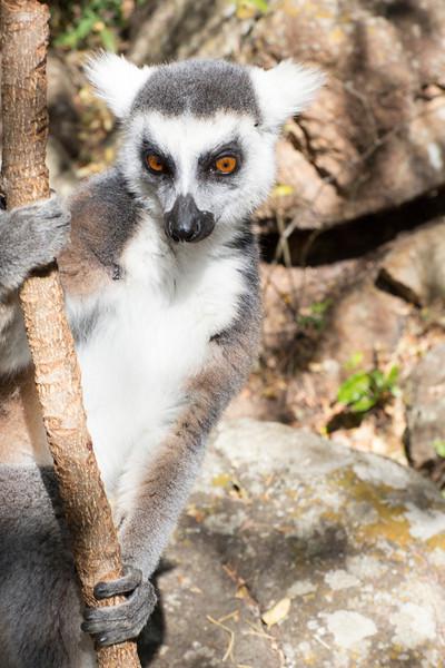 Madagascar_2013_IG3A3318.jpg