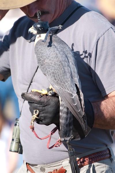 Clarise the Falcon