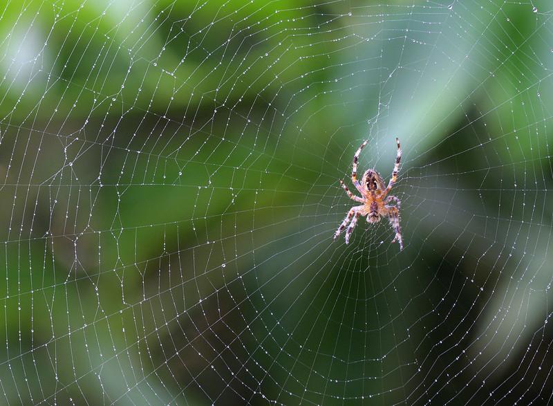 5868 Spider on Web.jpg