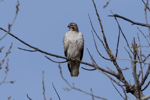 Birding at RMA 2-10-17