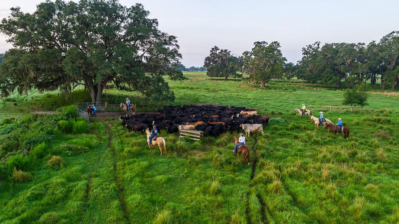 Barthle Cattle  (10 of 27).jpg