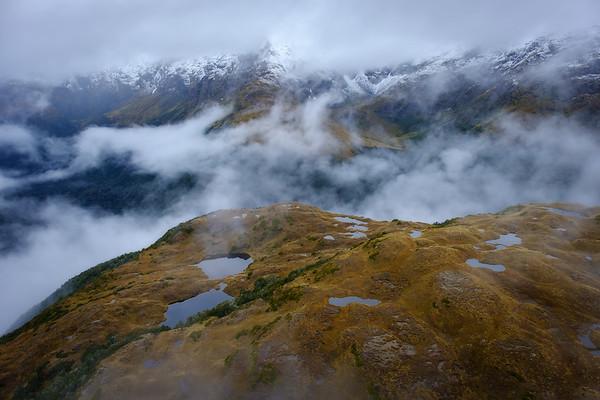 Life in Alpine Fiordland
