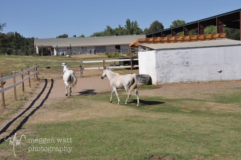 EB&Horses-092.jpg