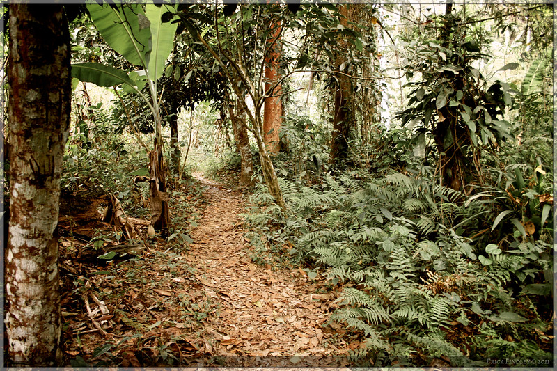 "The tropical hike was very fascinating...I definitely felt like I wasn't ""in Kansas anymore."""