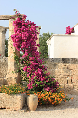 Cocarro_Flowers and Stones.jpg
