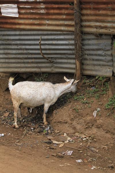 Kenya Part1 '15 163.JPG