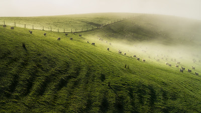 Trace O'Rourke - Fog on the pasture