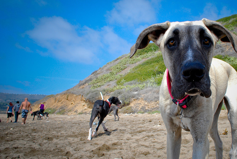 dogs_beach-093.jpg