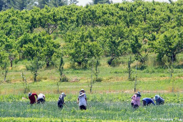 Farmers in Lunenburg