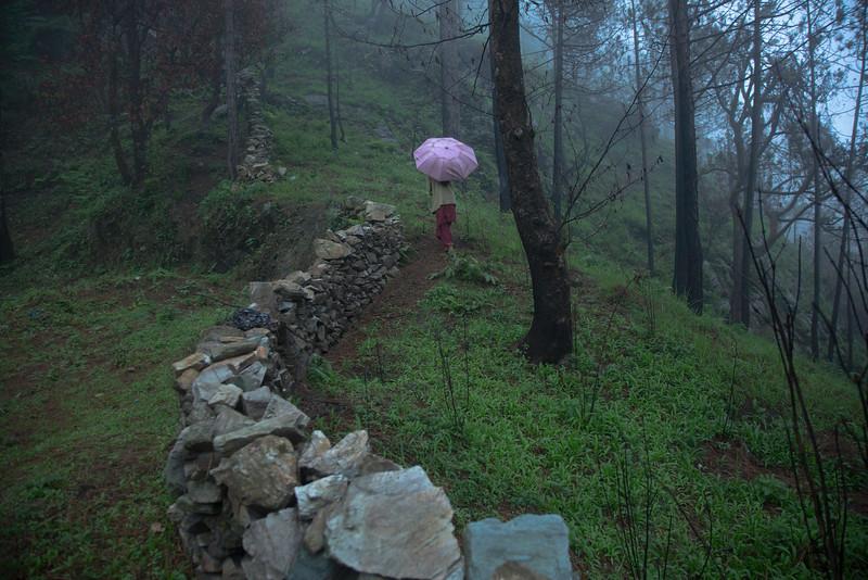 The hills of Chaukori