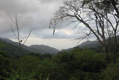 Trinidad: Asa Wright