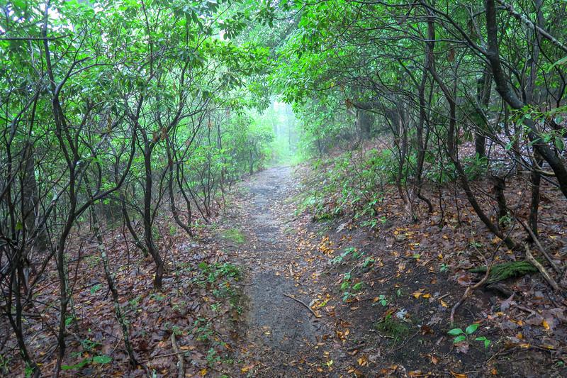 Mountains-to-Sea Trail -- 3,800'