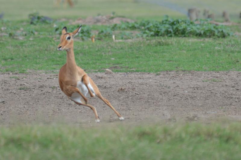East Africa Safari 15.jpg