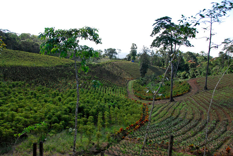 080126 0230 Costa Rica - La Fortuna to San Ramone Bus Trip _L ~E ~L.JPG