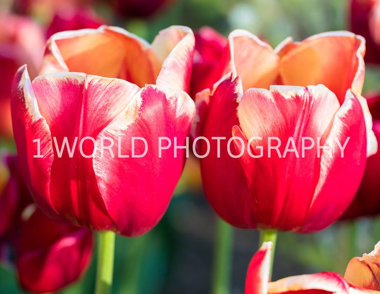 Cantigney Spring '17-11-2-6.jpg