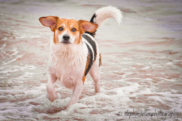 20141007dogs_fort_desoto_beach_Stephaniellenphotography.com-_MG_0024-Edit.jpg