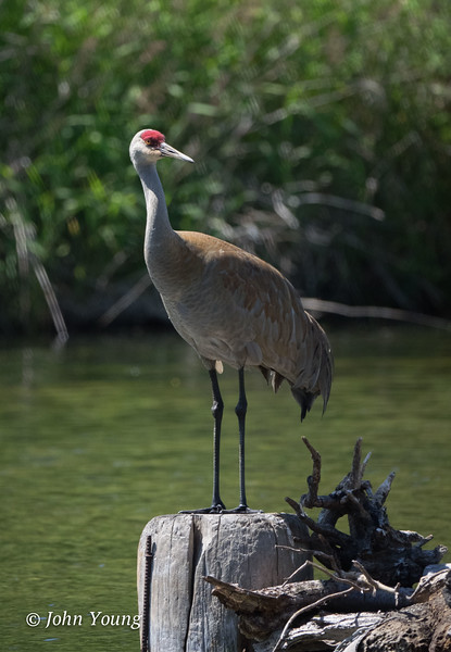 Riefel Bird Sanctuary - May 28, 2018