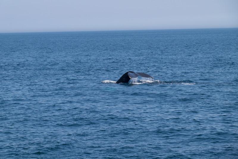 humpbacks-6290.jpg