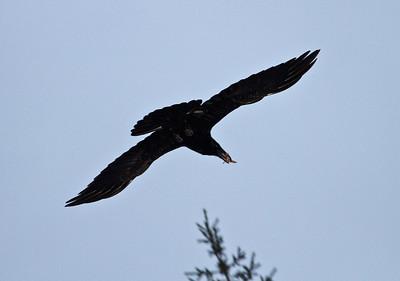 ZOO BIRD COUNT - 2011