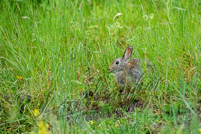 32602 Rabbits