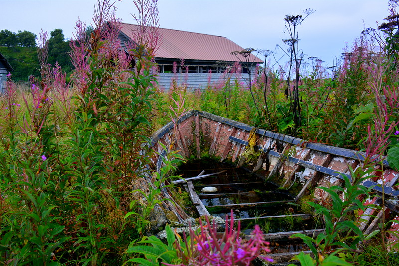 Abandoned-Row-Boat-Pink-Overgrowth-Blooming-Flowers.JPG