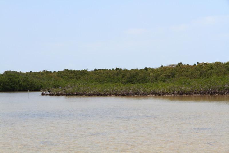 2010 05 05 Florida Keys 044.jpg