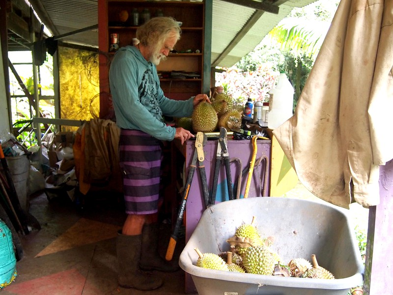 Michael-weighing-Maui-durian.jpg