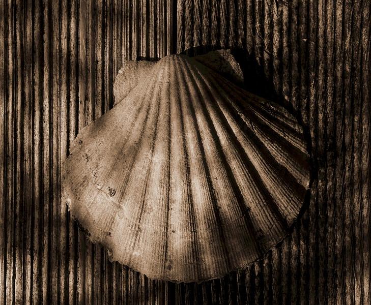 Rosemary - shell.jpg