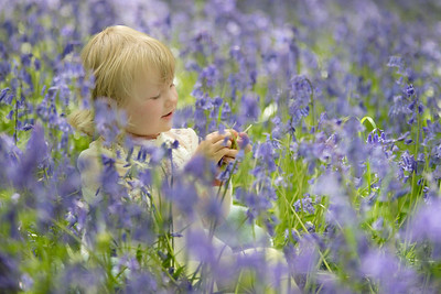Keeley's Bluebells