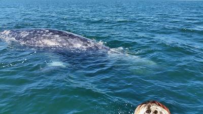 Whale Trip 2015