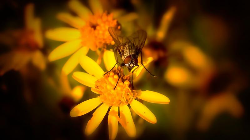 Bugs and Beetles - 174.jpg